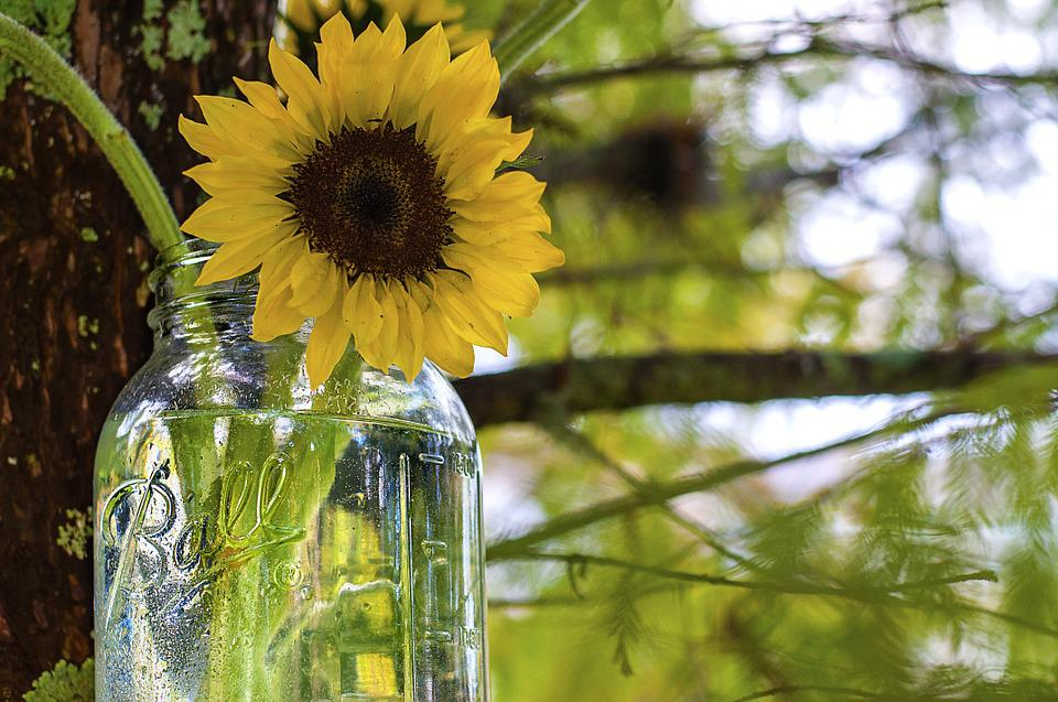 Sunflower in rustic glass jar