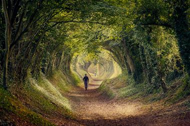 Tunnel of trees in Halnaker, West Sussex