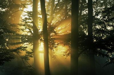 Trees shutterstock_97823594